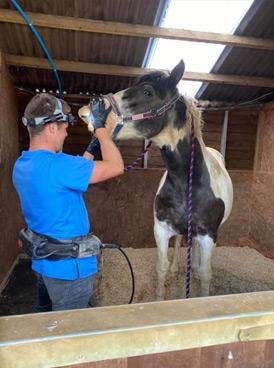 Equine dental examinations