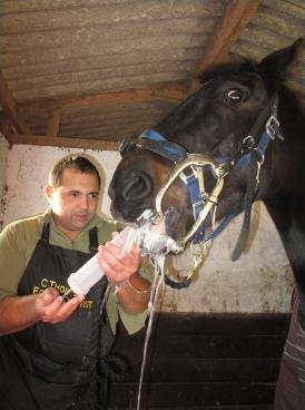 Equine dental specialist